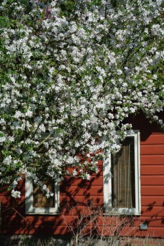 bloesem-tuinhuis