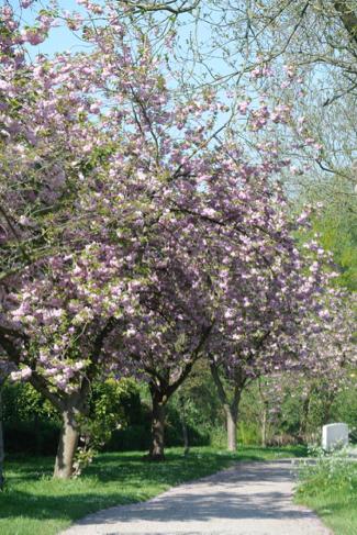 bloesem-amstelglorie-tuinpark