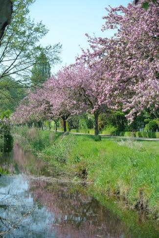 amstelglorie-volkstuin-tuinpark