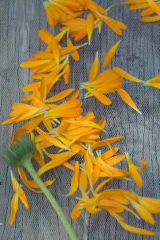 thee-goudsbloemen-blaadjes