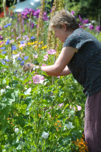 bloemen-plukken-volkstuin